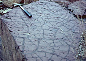 rock with dessication cracks - source Indiana Unversity