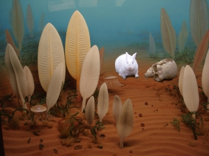 Precambrian rabbit