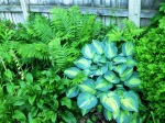 So many different colors of green in the ferns and hostas
