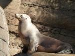 Seal sunning itself