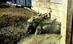 warthog piglets!