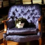 cronkite-kitten-chair