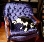 muffin-sprawled-chair