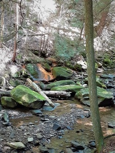 PA forest and creek